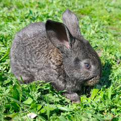 little rabbit on green grass background