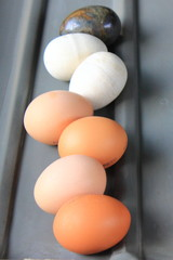 egg sorting-machine