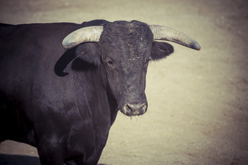 spectacle of bullfighting, where a bull fighting a bullfighter S