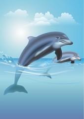 Jumping Dolphins Illustration