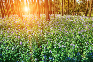 flower blossom in forest during sunset