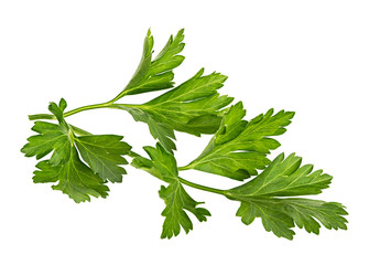 Branch of fresh parsley isolated on white