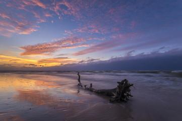 Drzewo wyrzucone przez falę na morską plażę