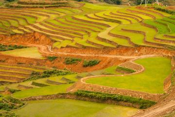 Wall Mural - Beautiful rice terraces in Sapa, Vietnam.