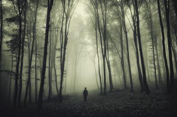 Obraz haunted forest - fototapety do salonu