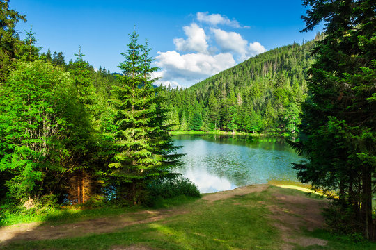 lake near the mountain in pine forest