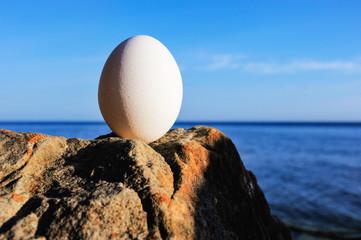 Hen's egg