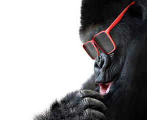 Unusual animal fashion; gorilla face with red sunglasses