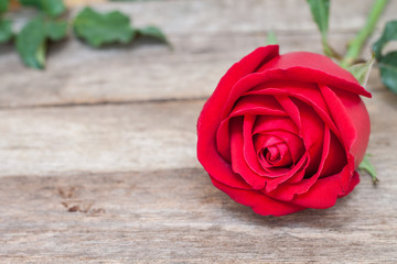 Red roses on wood background