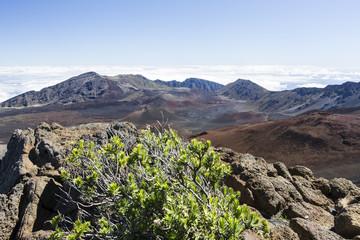mauna loa volcano view