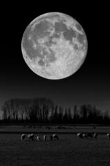 Gregge al chiaro di luna