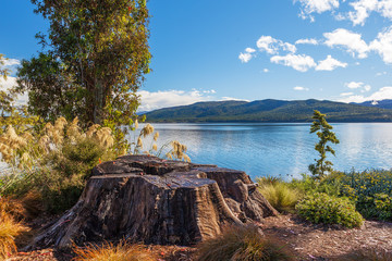Lake Te Anau with big tree stump on the foreground, Fiordland, N