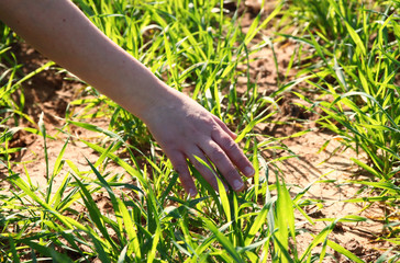 Close up of a woman's hand touching grass blades  in field. sele