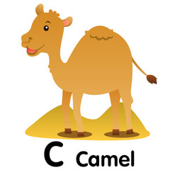 Illustrator of animal alphabet letter C for camel