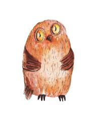 Owl big. Watercolor illustration. Hand drawing.