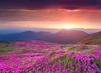 Wall Mural - Colorful summer sunrise in the Carpathian mountains