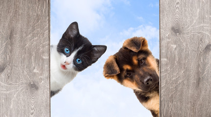 Wall Mural - Puppy and kitten peering