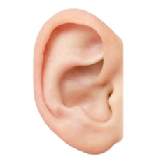 ear on a white background