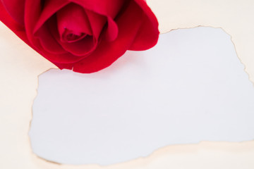 Single red rose with paper that was burnt at the edges