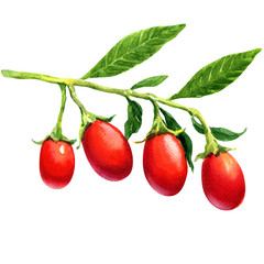 Watercolor goji berries isolated.