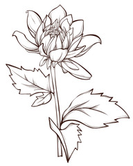 Vector  flower isolated on white background. Element for design.