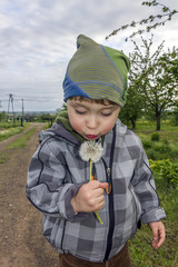 Little boy blows at the dandelion