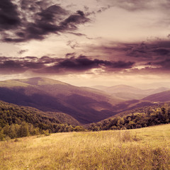 meadow in high mountains