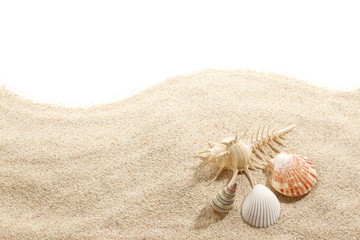 Shells on Beach Sand