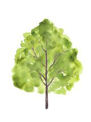 樹木 水彩イラスト