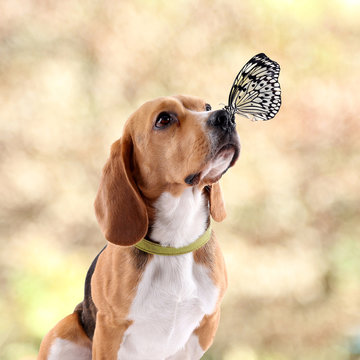 Colorful butterfly sitting on dog's nose on autumn background