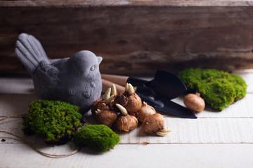 Moss and bulb