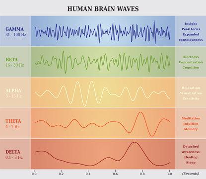 Ondes Cérébrales Humaines Diagramme / Illustration Multicolore