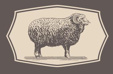 Graphical Ram, Sheep