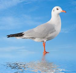 white bird seagull on sky background