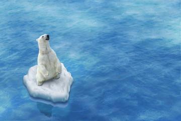 Ours Blanc / Fonte des glaces
