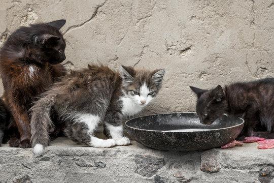 Vagrant cats