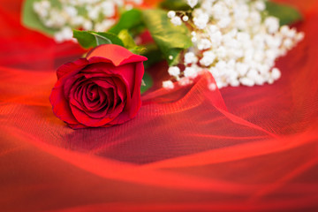 Red rose on tulle netting