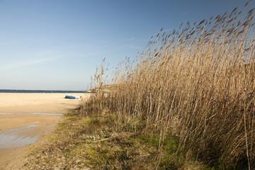 Sardegna: vegetazione selvaggia sulla spiaggia