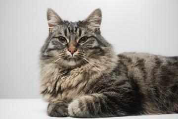 Beautiful cat posing