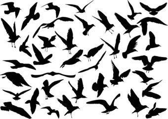 set of forty gull black silhouettes