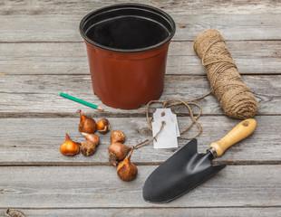 Tulip bulbs, pot, shovel and tag