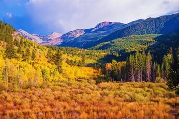Fototapete - Scenic Aspen Lanscape
