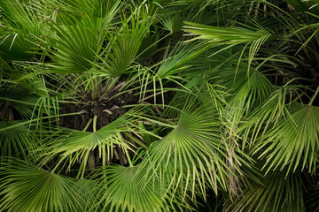 Close-up view of green palm tree leaf