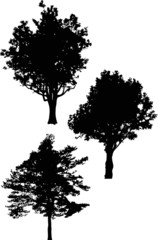 three isolated large trees silhouettes