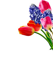 Spring flowers tulips and hyacinths isolated on white background