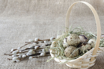 Quail eggs in the basket with willow branch, close up