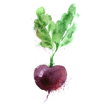 beet vector logo design template. vegetables or food icon.