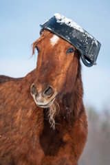 Fototapete - Funny horse with rubber feeding bucket on its head