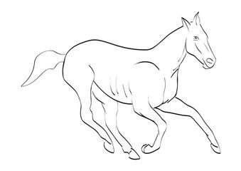 Векторное изображение лошади
