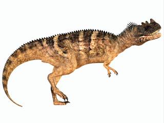 Ceratosaurus over White